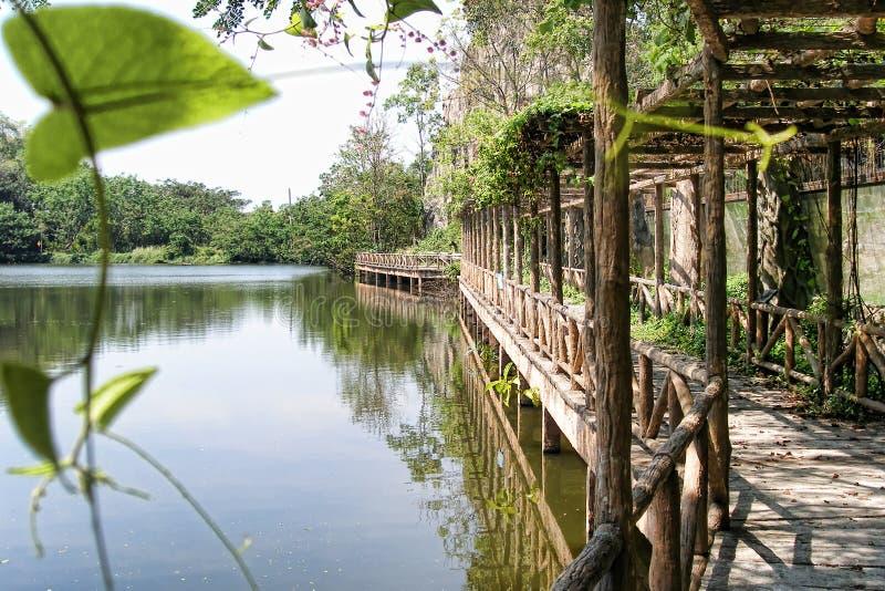 Garden in Thailand stock photo