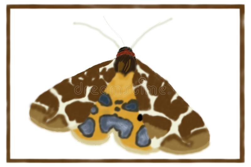 Garden Tiger Moth Arctia caja - Digital Art vector illustration