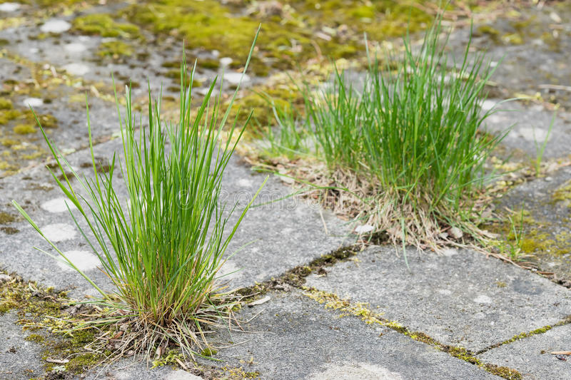 Garden tiles and grass royalty free stock image