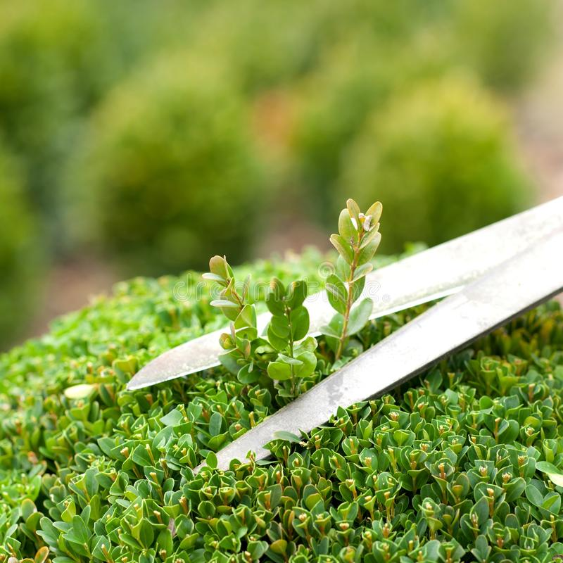 Free Garden Time Royalty Free Stock Photo - 23737115