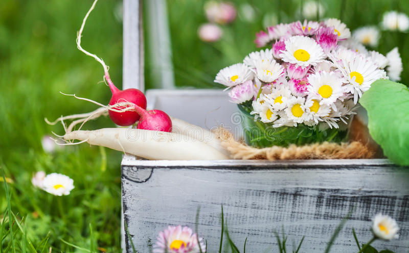 Garden time, radishes, daisies stock images