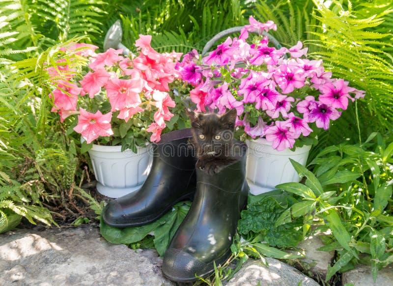 Garden tool and funny kitten stock photos