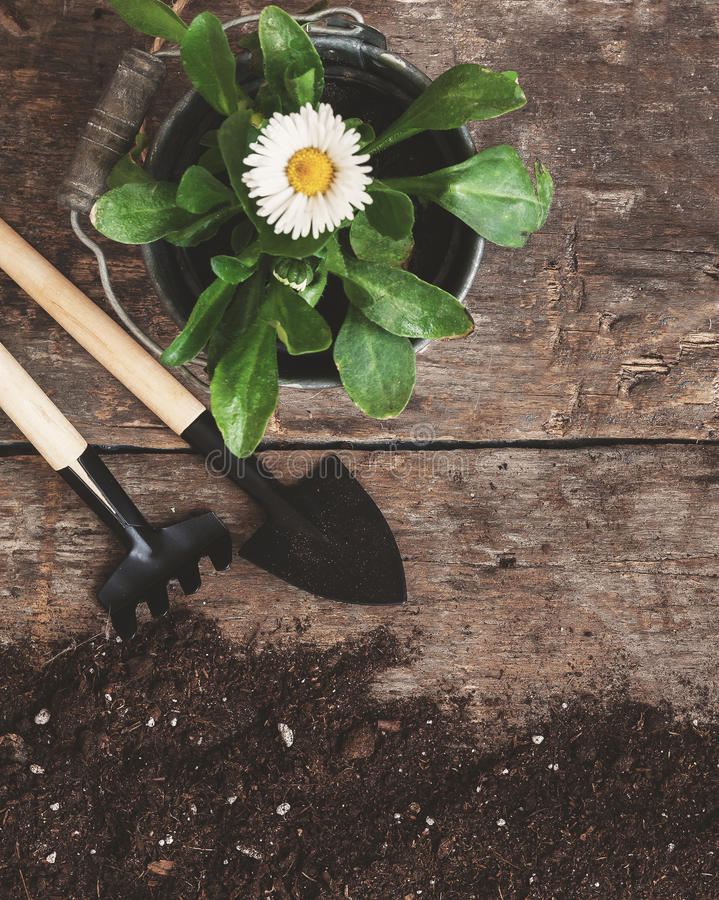 Garden tool, shovel, rake, watering can, bucket, tablets for plants, flower daisy in a flowerpot on a wooden old brown table with royalty free stock photography