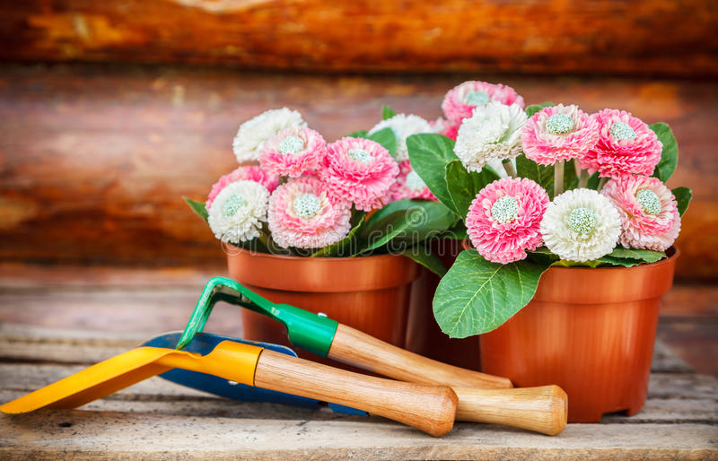 Garden tools. And flowers in pot against wooden wall royalty free stock images