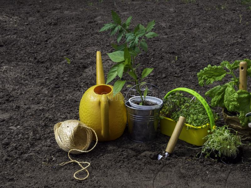 Garden tools with pots and soil seedlings in rustic style. Copyspace royalty free stock photos