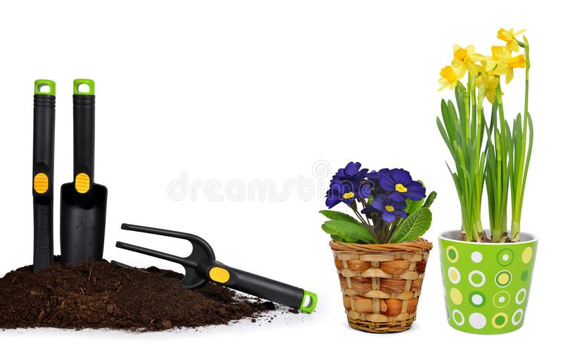 Garden tools in soil and spring flower primrose and narcissus in pot. royalty free stock image