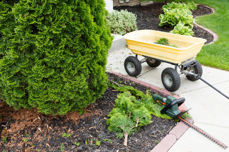 Garden tools used to trim arborvitaes. In spring with a handheld hedge trimmer and small yellow metal cart standing alongside the evergreen Thuja trees stock photos