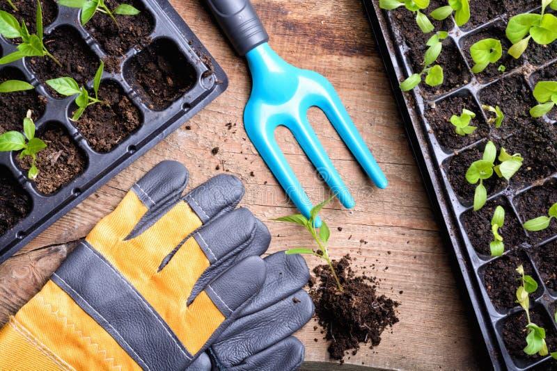 Garden tools. On wooden background stock photos