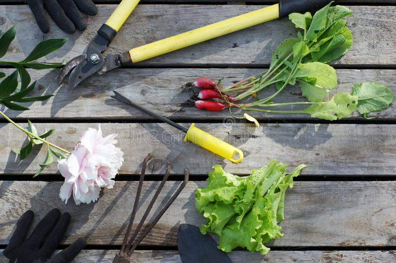 Garden tools on a wooden background on a summer day in the village.  stock photo
