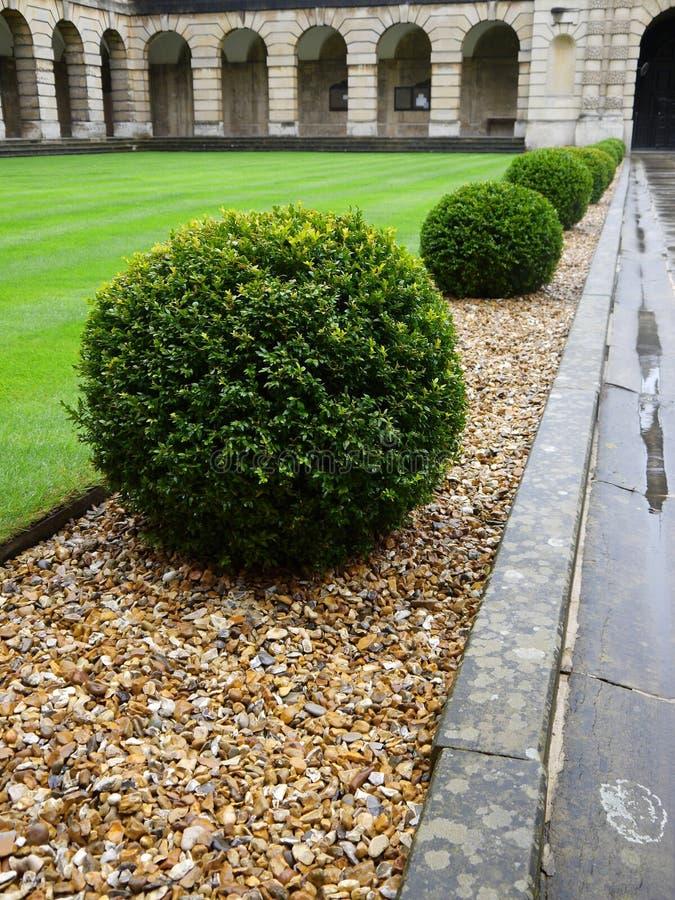 Garden: topiary hedge detail - v stock photo