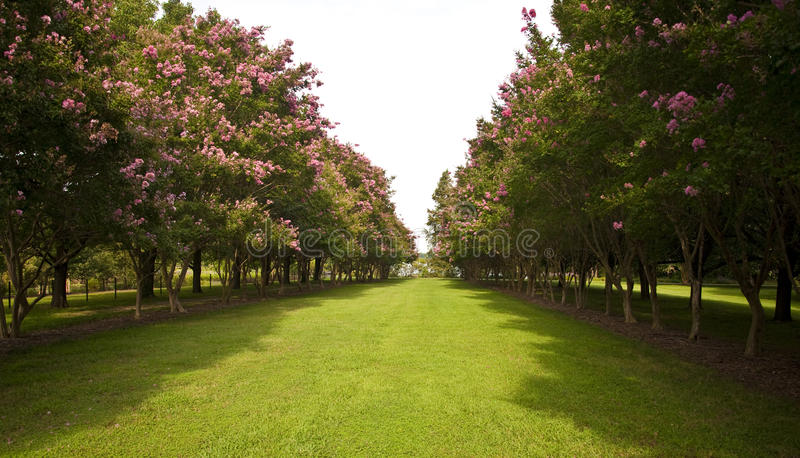 Download Garden with trees on sides stock photo. Image of grass - 10848240