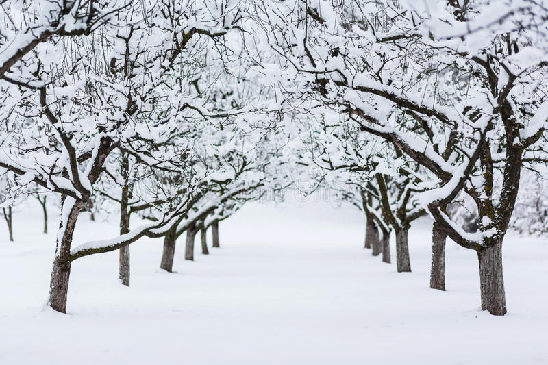 Garden trees in winter. Covered in snow royalty free stock photos