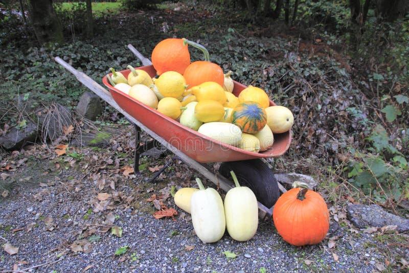 Garden Vegetables in Wheel barrel royalty free stock photography