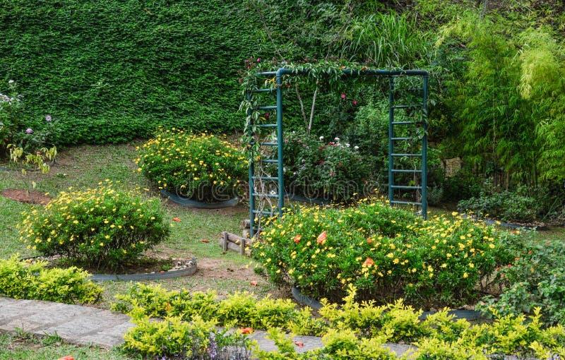 Garden, Vegetation, Botanical Garden, Plant royalty free stock image