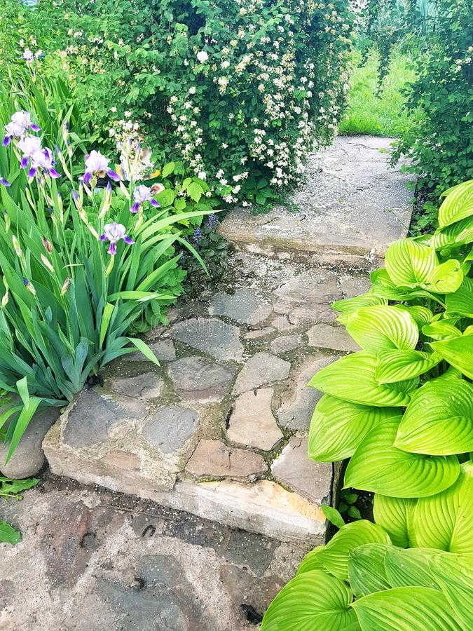 Garden view with hosts, irises and stone walkway. Cottage, vein, venation, green, greenery, countryside, landscape, design, bed, gardening, plants, leaf stock photos