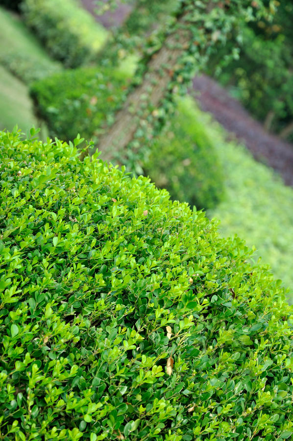 Download Garden View,  Shrub Maintained In Shape And Trees Stock Image - Image: 21529889