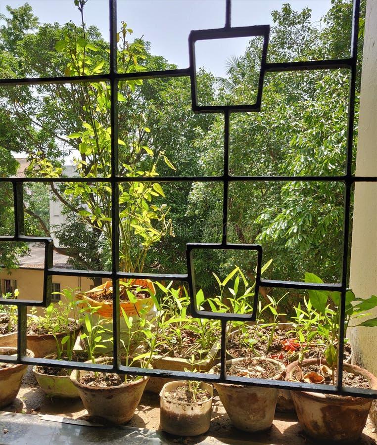 Garden-vyn från hemfönstret