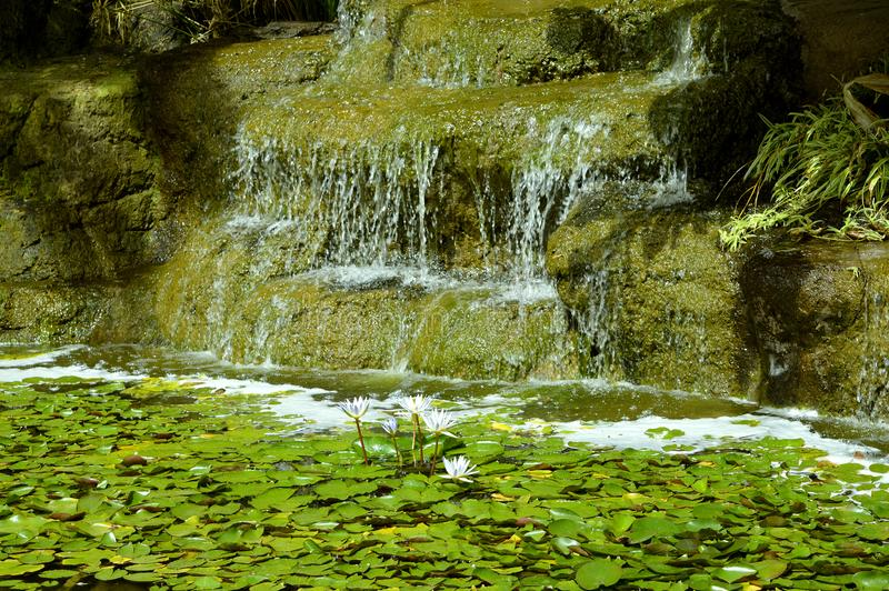 Garden waterfall with water lilly flowers stock photo