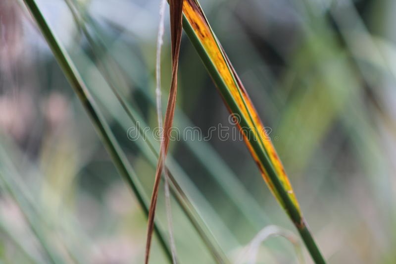 Grasses in English garden, closeup, with lavender and small flowes 9 royalty free stock image