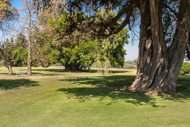 Download Garden Winery Chile stock photo. Image of trees, valley - 28967894