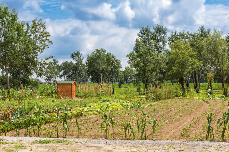 Garden with wooden shed. Wooden shed in the middle of the garden royalty free stock photography