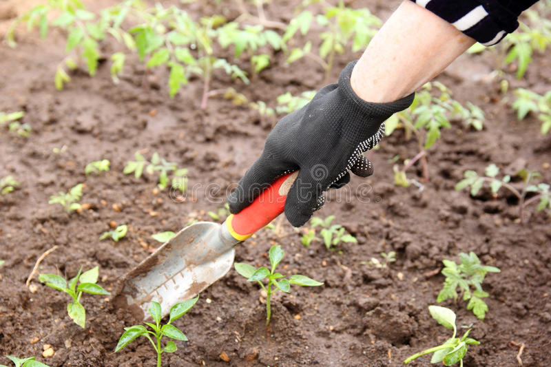 Garden work stock photo