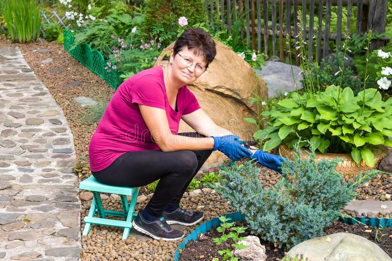 Garden work. Positive smiling senior woman cutting coniferous plant using a hedge shears on her. Garden work. Positive smiling senior woman cutting coniferous stock photo
