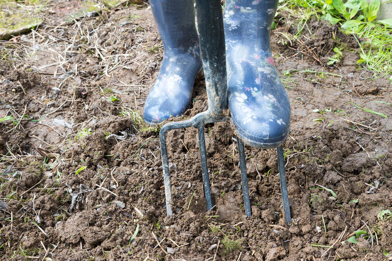 Garden works - Digging in soil with garden fork royalty free stock photo
