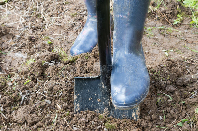 Garden works - Digging in soil with spade royalty free stock image