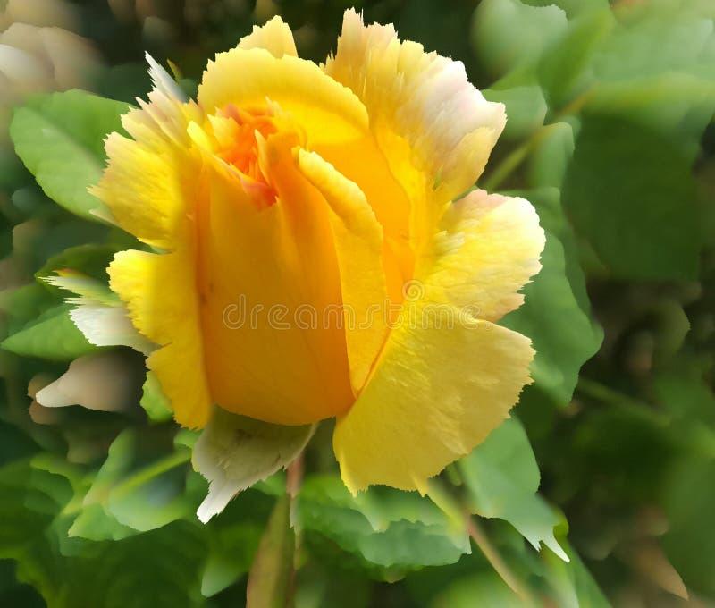 Garden yellow flower. The beautiful rose. Nature stock photos