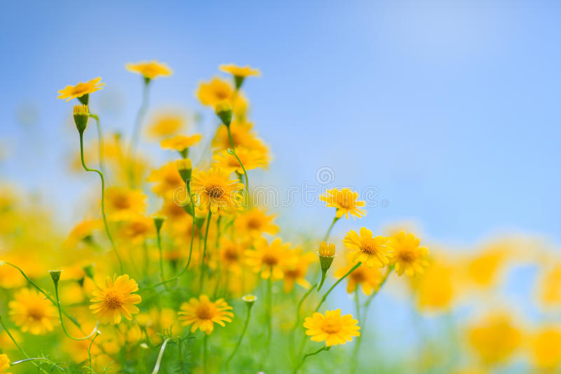 The garden and Yellow flowers royalty free stock image