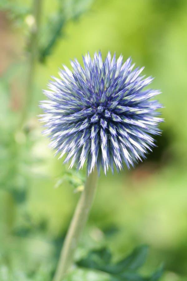 Download Garden3 stock image. Image of garden, grow, agriculture - 172223