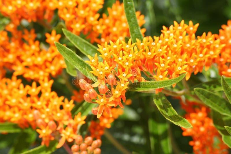 Garden5 Lizenzfreies Stockfoto