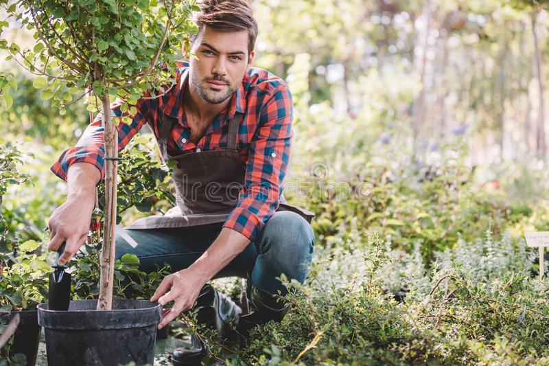 Gardener in apron planting tree while working in garden stock photo