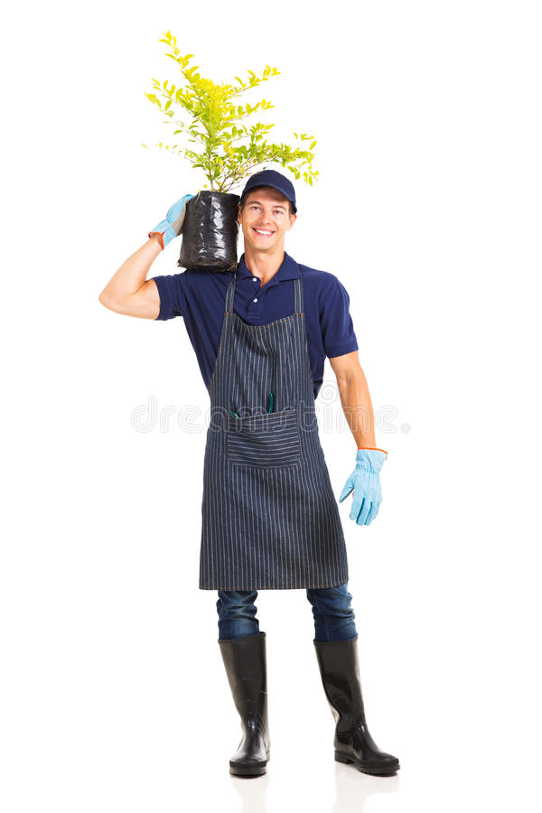 Gardener carrying plant stock photos