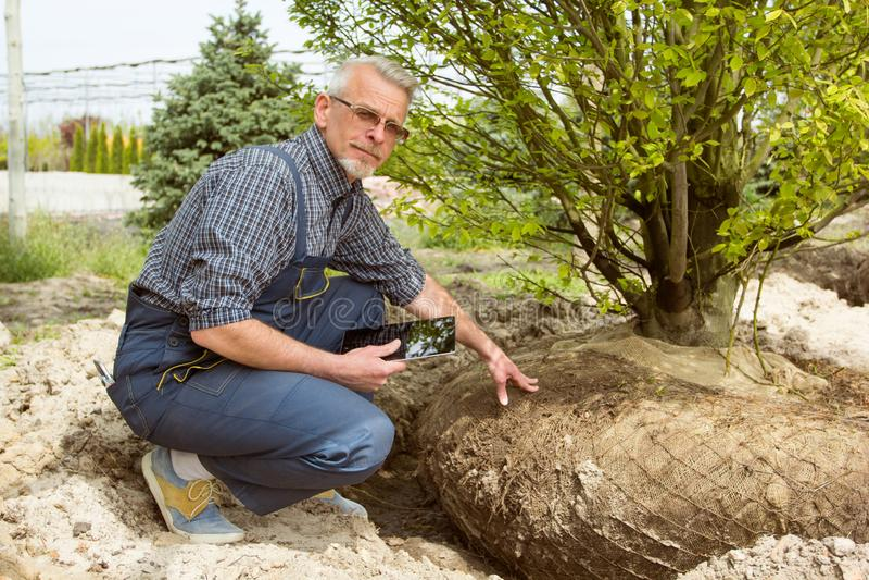 Gardener checks tree roots in garden shop royalty free stock image