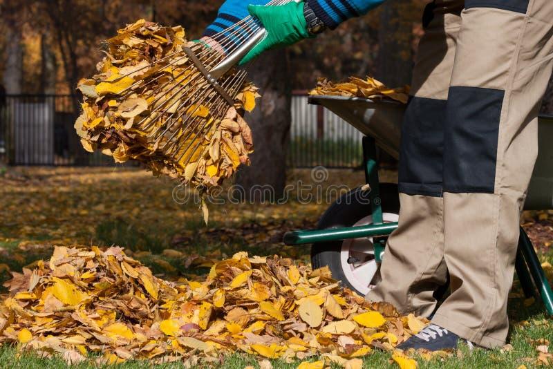 Gardener cleaning garden during autumn stock images