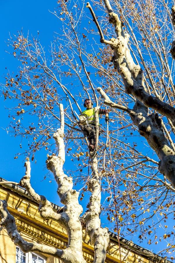 Gardener cuts a plane tree in Aix en Provence, France. AIX EN PROVENCE, FRANCE - DEC 10, 2015: gardener cuts a plane tree in Aix en Provence, France. The plane stock photos