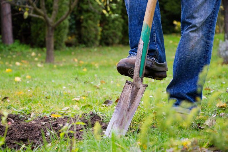 Gardener digging in a garden with a spade stock photo