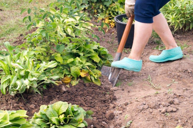 Gardener digging royalty free stock photos
