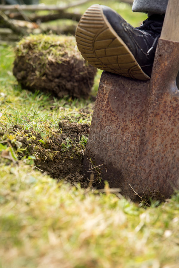 Gardener digging a hole with a spade, gardening and horticulture stock photography
