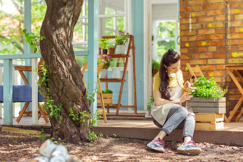 Gardener examining a plant outside the cafe. Keeping natural beauty. Focused gardener sitting on a porch outside the cafe and examining a plant royalty free stock photos