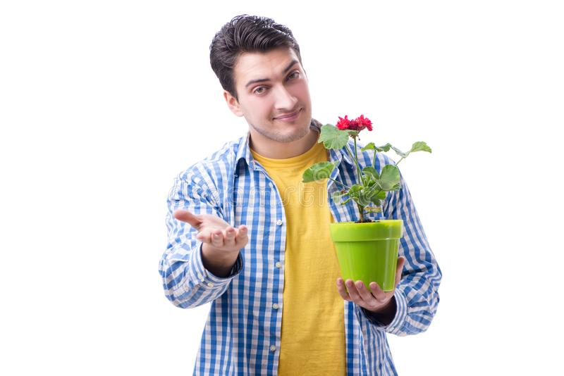 Gardener florist with a flower in a pot isolated on white backgr stock image