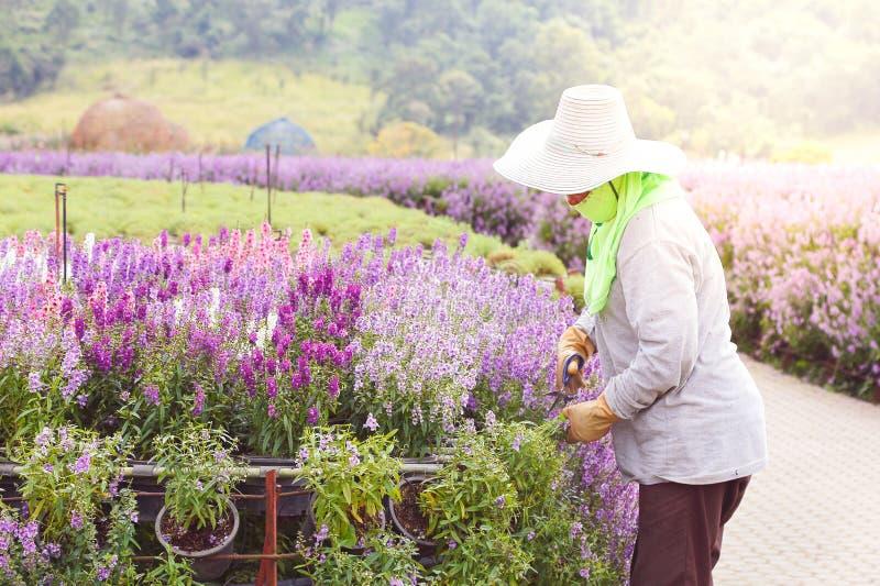 Gardener flower stock photos