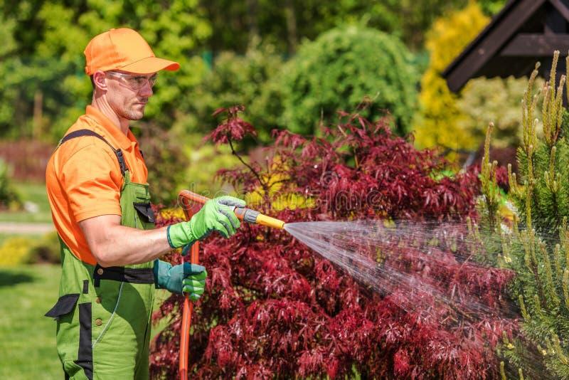 Gardener with Garden Hose stock photography
