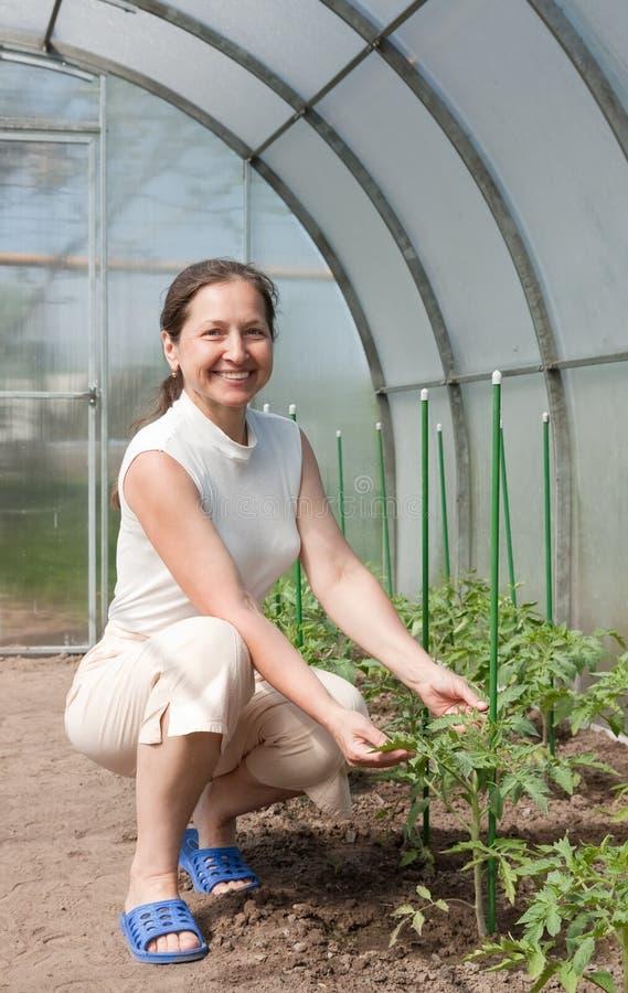 Download Gardener in greenhouse stock photo. Image of happy, horticulture - 25505250