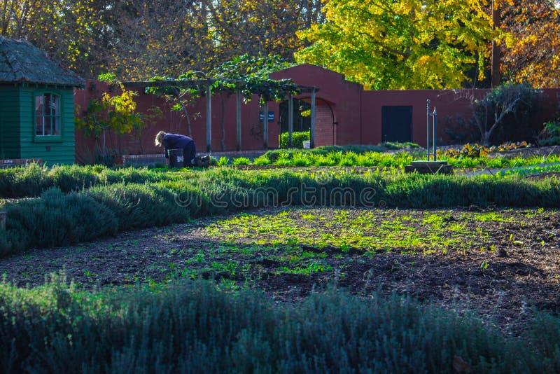 Gardener at Hamilton Gardens, New Zealand royalty free stock photo