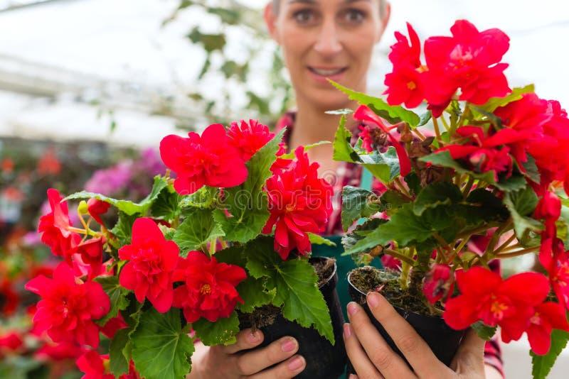 Download Gardener In Her Green House Flower Shop Stock Image - Image of colourful, gardener: 28735943