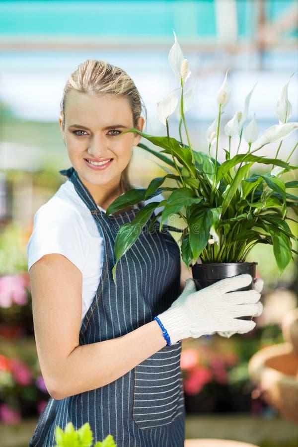 Download Gardener holding flowers stock image. Image of happy - 27064191