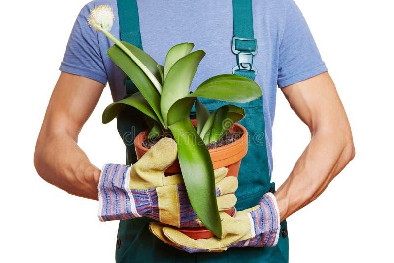Download Gardener Holding Paintbrush Plant Stock Photo - Image: 28438186